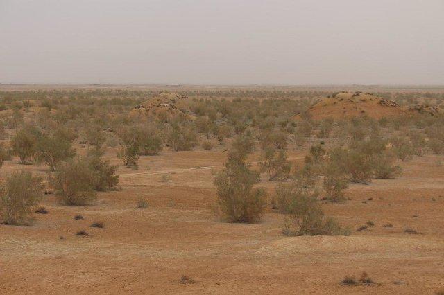 کاشت درخت تاغ در سه هزار هکتار از بیابان های خراسان رضوی
