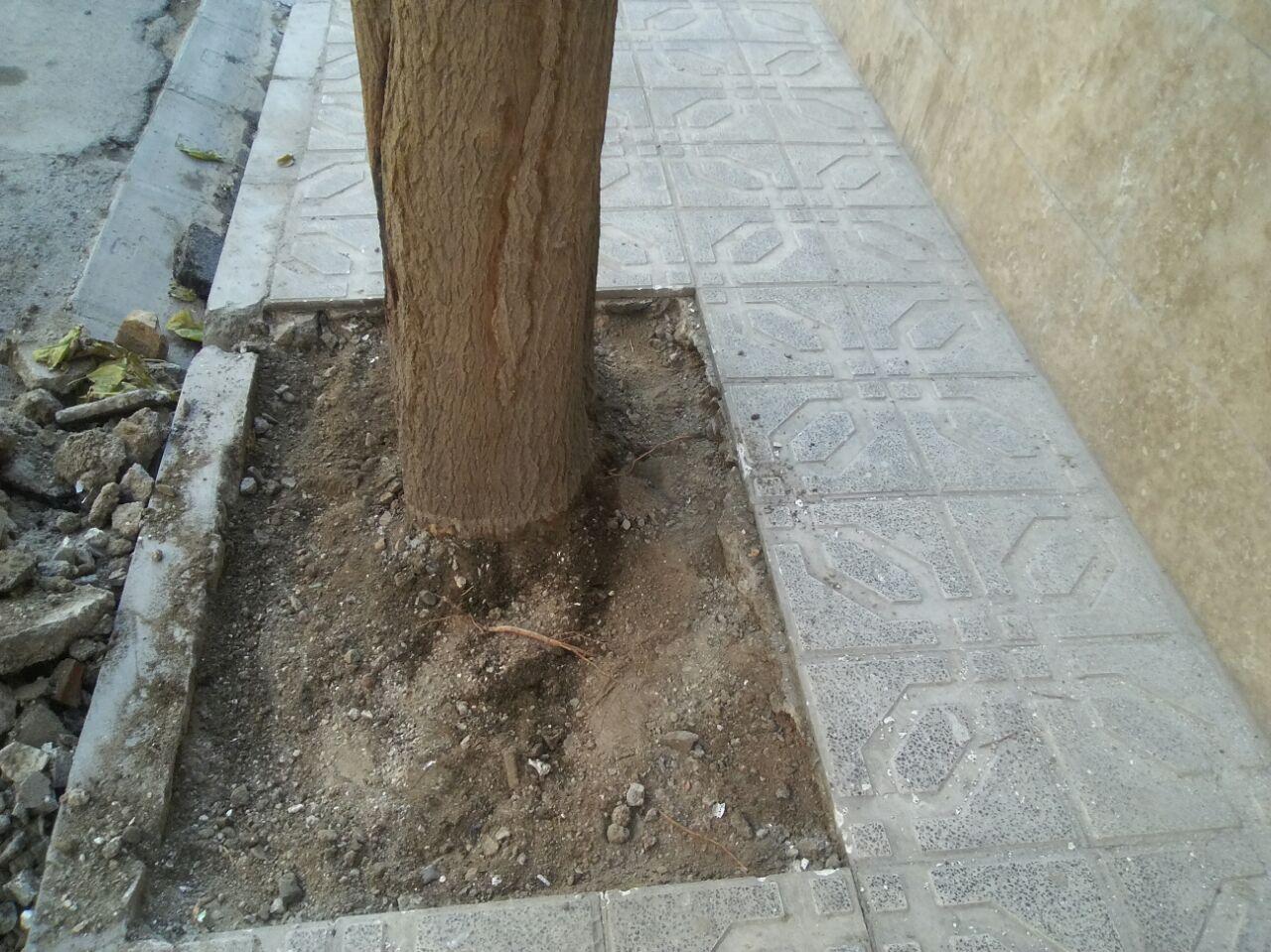 شهروندان منطقه ۱۰ به پویش درخت محله من پیوستند