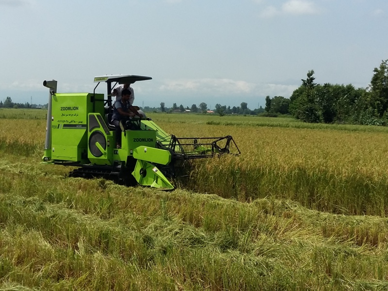 انجام نخستین برداشت مکانیزه برنج گیلان