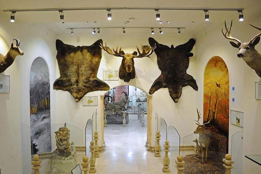 موزه طبیعت و حیات وحش دارآباد بازگشایی شد