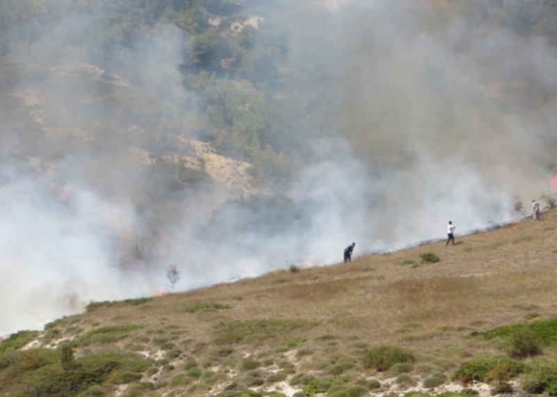 ۷۰۱۷ هکتار از مناطق حفاظت شده در آتش سوخت