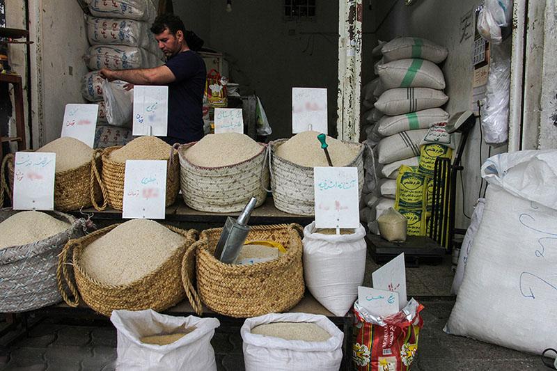 ۷ رقم جدید برنج در هشت سال اخیر معرفی شد