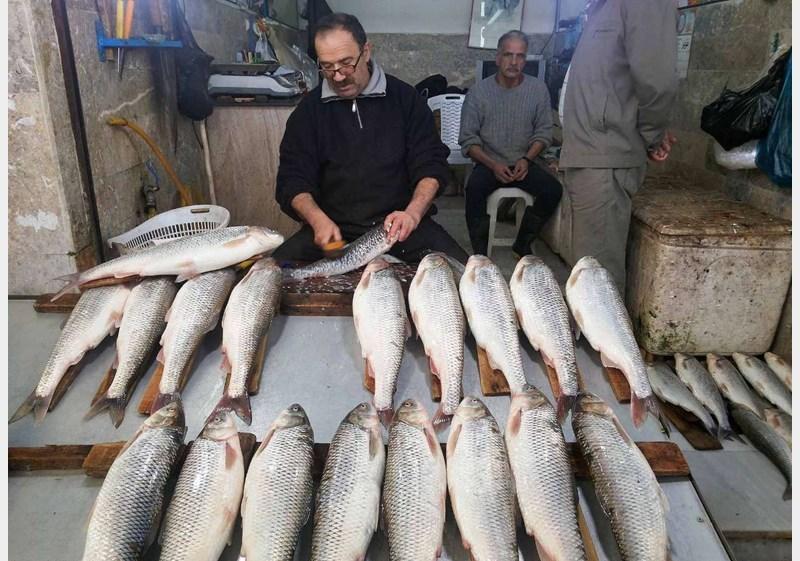 ۱.۳ هزار تن ماهی استخوانی دریای خزر تا پایان آذرماه صید شد