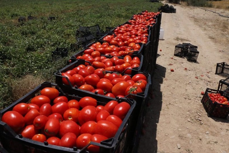 قیمت گوجهفرنگی بوتهای درجه ۱ در خرده فروشیها ۹۵۰۰ تومان است