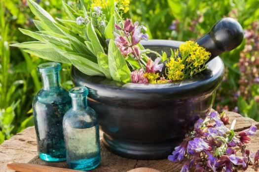 امسال صادرات گیاهان دارویی به ۷۰۰ میلیون دلار خواهد رسید