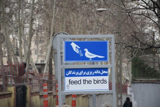 سه محل دانه ریزی برای پرندگان جانمایی شد