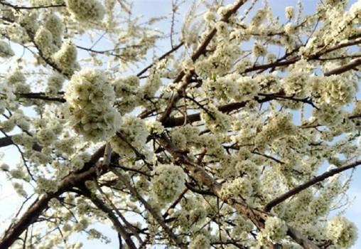 احتمال خسارت به گلخانه ها و شکستن شاخه های درختان