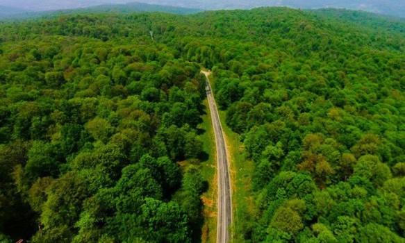 تدوین «مدیریت پایدار جنگلهای هیرکانی» در مراحل نهایی قرار دارد