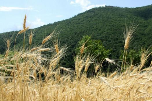 راهاندازی سامانه ملی پیامرسان بخش کشاورزی در سال ۹۹