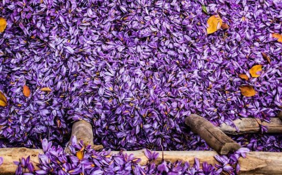 خرید حمایتی ۱۸ تن زعفران برای تنظیم بازار