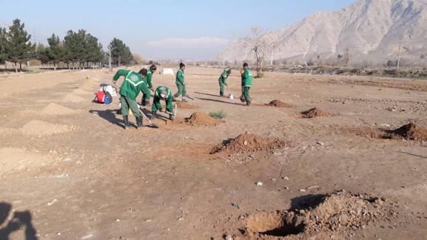 کاشت ۳۵ هزار اصله نهال در عرصههای جنگل کاری جنوب تهران