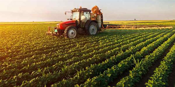 ۳۸۰ هزار تن بذر گندم در اختیار کشاورزان قرار گرفت