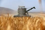 افزایش یک میلیون تنی محصولات کشاورزی با اجرای جهش تولید در دیمزارها