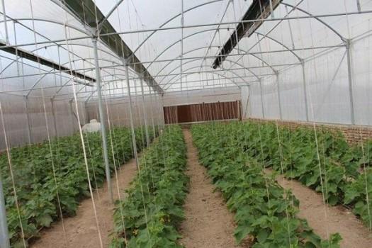 احکام پیشنهادی رفع موانع تولید و توسعه گلخانهها تهیه میشود