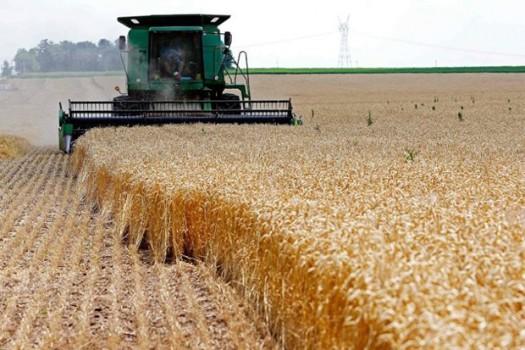 دستورالعمل خرید تضمینی گندم و دانههای روغنی ۱۴۰۰