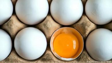 اختلاف قیمت ۱۲ تا ۱۷ هزار تومانی تخم مرغ تنظیم بازاری و آزاد!