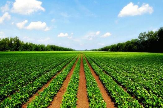 افتتاح ۸۱ هزار میلیارد ریال طرح ملی کشاورزی در سراسر کشور