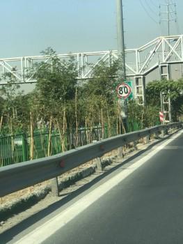 توسعه فضاهای سبز شهری با مشارکت شهروندان شمال تهران