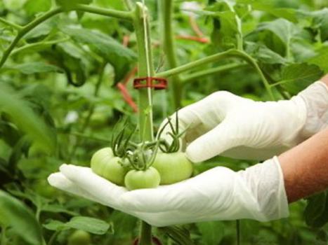 ۴۰ میلیارد دلار تولید ناخالص داخلی با ترسیم بوم امنیت غذایی