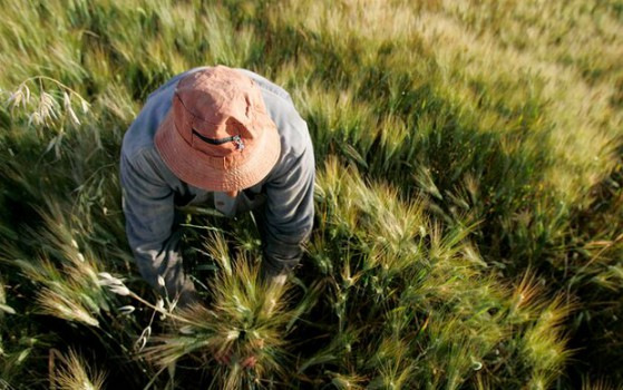 پرداخت خسارت کشاورزان به صورت هفتگی