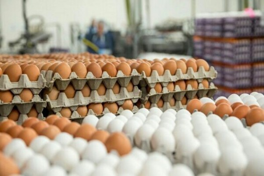 تشکیلکمیته تخصصی ساماندهی بازار مرغ و تخممرغ