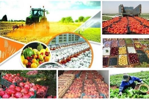عرضه مستقیم محصولات کشاورزی در دستور کار قرار گرفت