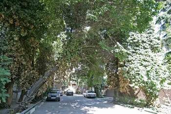 طرح محله سبز در منطقه۲ اجرا میشود