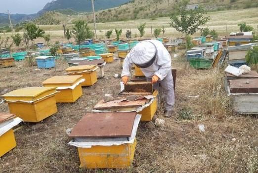 پیشنهاد اختصاص ۵۸۵۰ میلیارد تومان اعتبار به صنعت زنبورداری