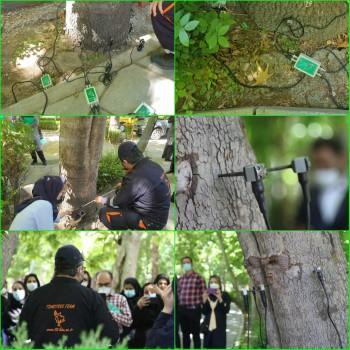 اسکن درختان کهنسال در منطقه شش تهران