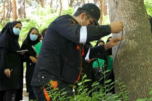 اجرای عملیات توموگرافی درختان پرخطر سطح منطقه۷