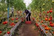 ۹۴ درصدی برنامه احداث گلخانهها در سال گذشته تحقق یافت