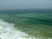 شکوفایی جلبکی آبهای کشور پایش میشود
