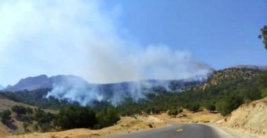 مهار ۶ آتشسوزی در جنگلهای کهگیلویه و بویراحمد